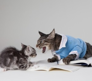 arguing cats